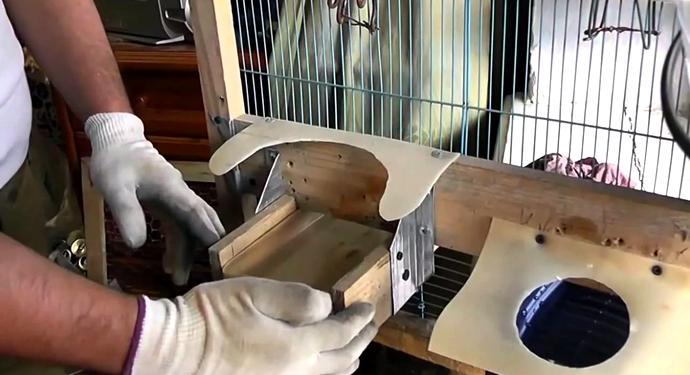 уборка клетки французского барана