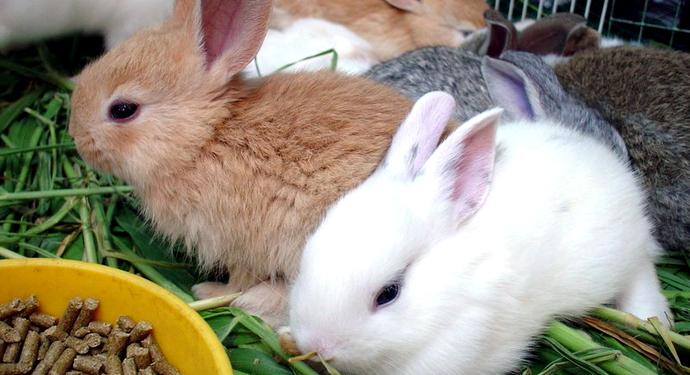 2 маленьких кролика