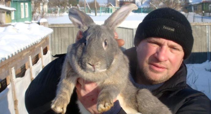 кролик для случки