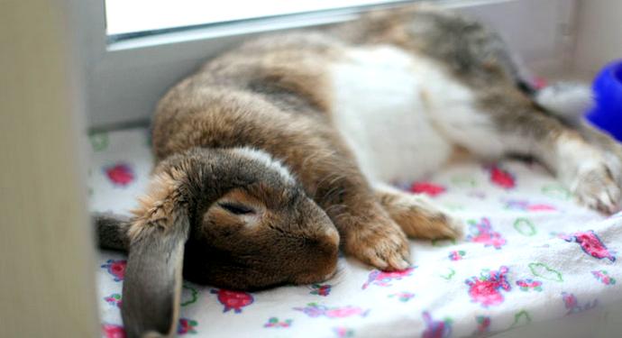 кролик на боку