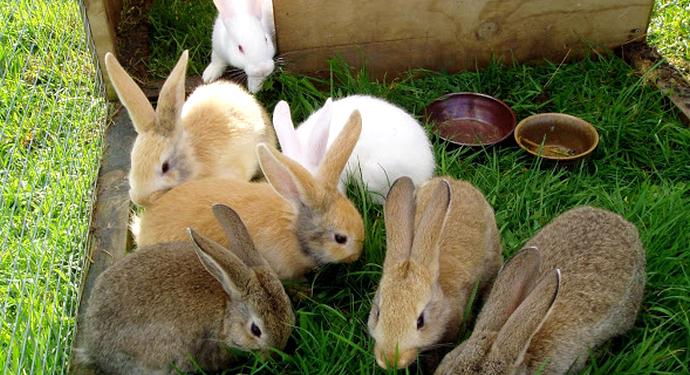 кролики в летнее время на прогулке
