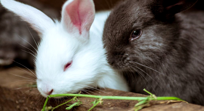 обиженная крольчиха