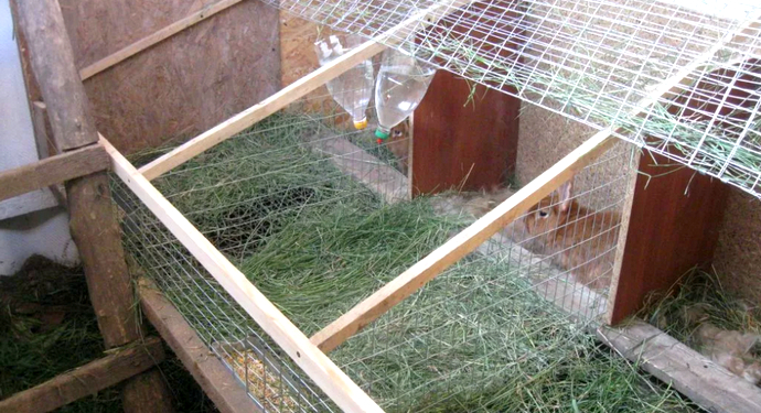 оснащенная клетка для кролей