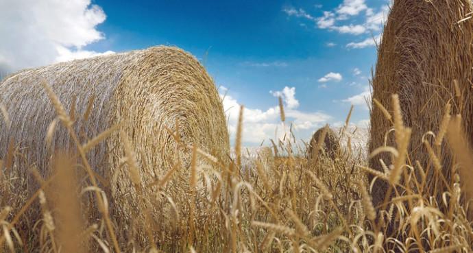 сено на поле
