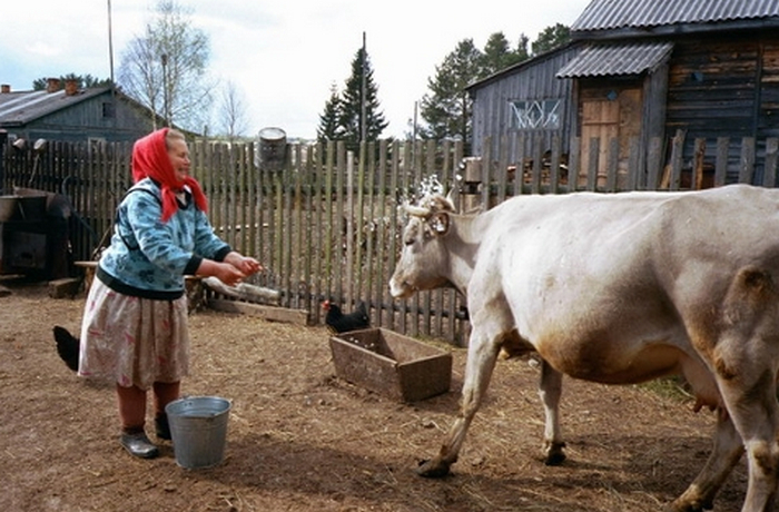 бабушка зовет корову
