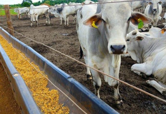 корова стоит