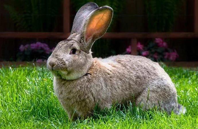красивый кролик
