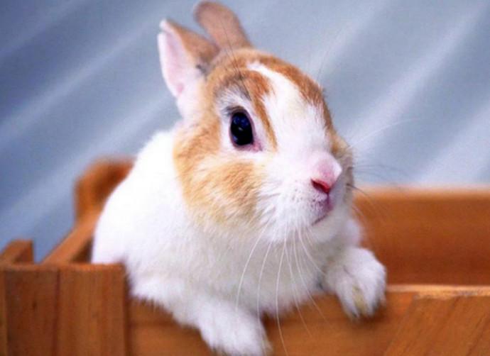 кролик мальчик