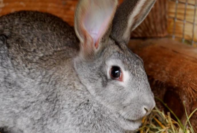 кролик смотрит