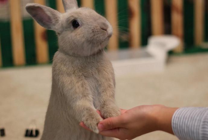 кролик здоровается