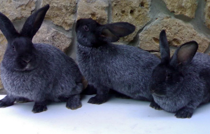 много кроликов