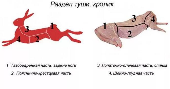 схема кролика