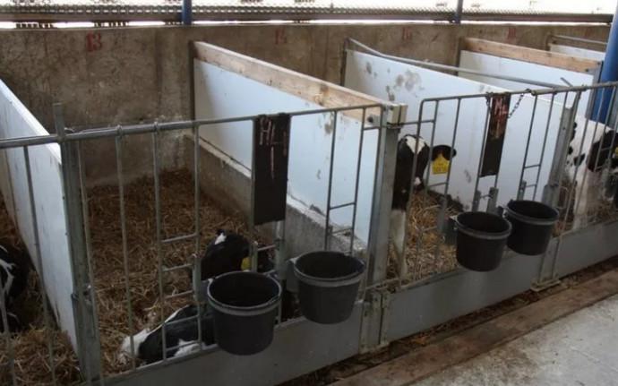 домики коров