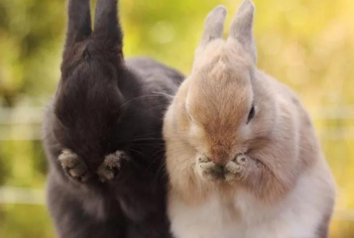 два кролика