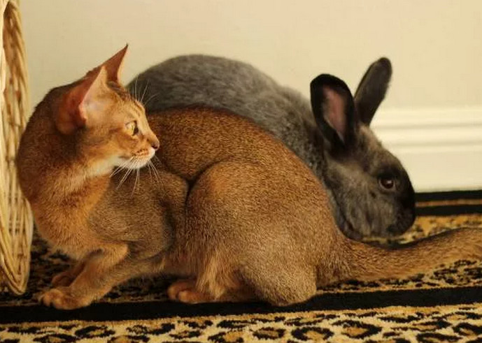 кот и кролик