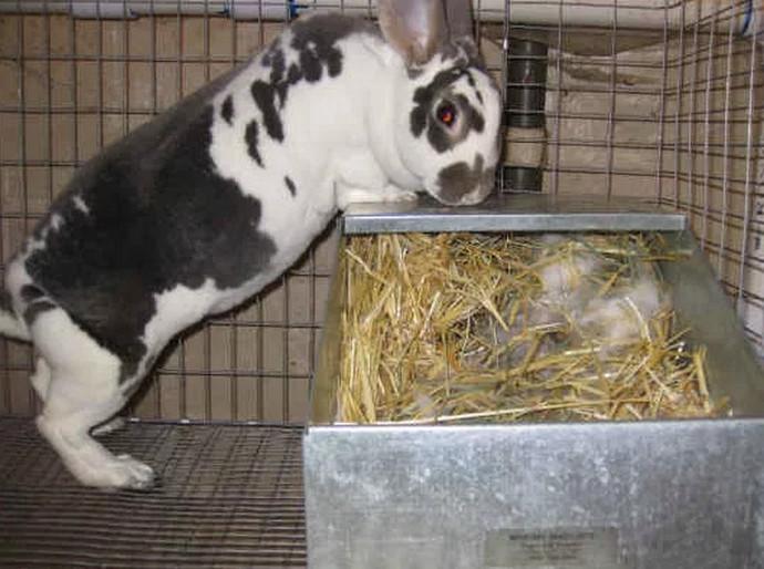 крольчиха стоит