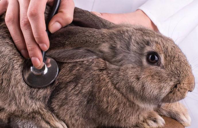 кролик болеет