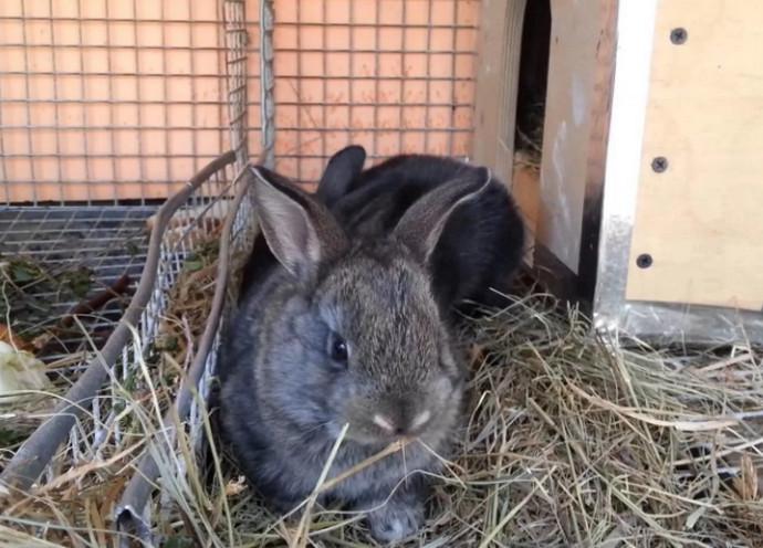 кролик лежит