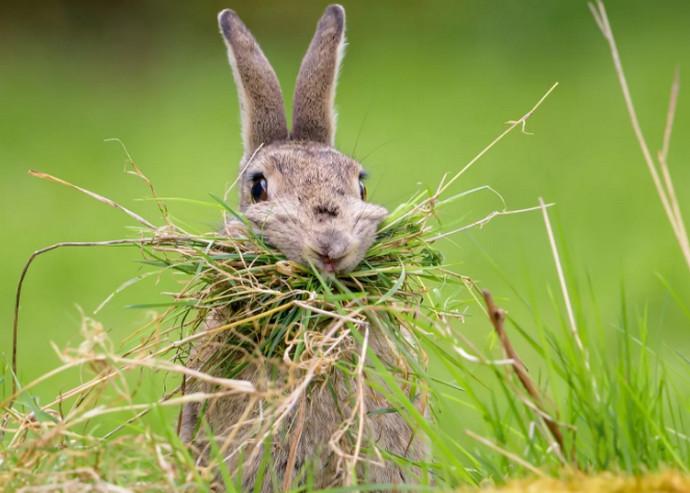 кролик на траве