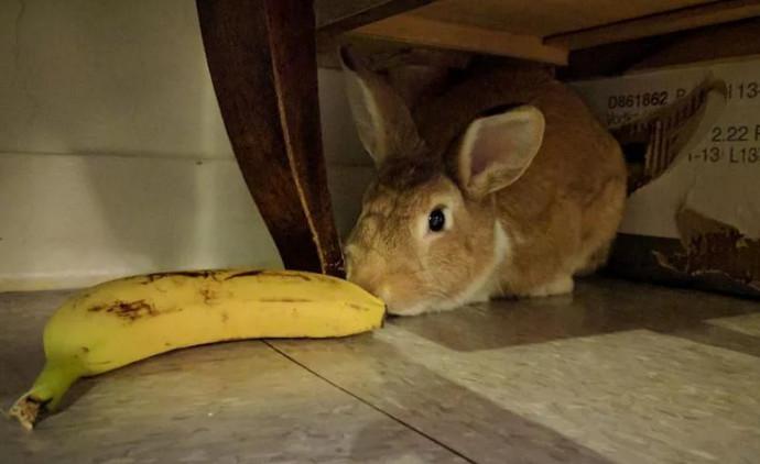 кролик нюхает