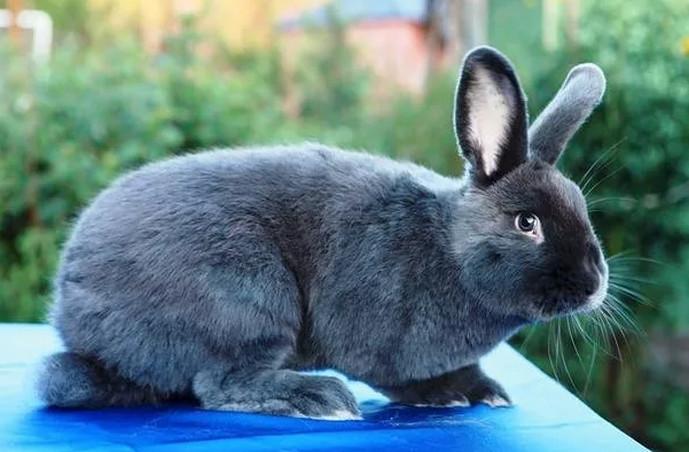 кролик сидит