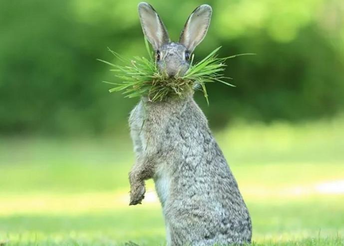 кролик стоит