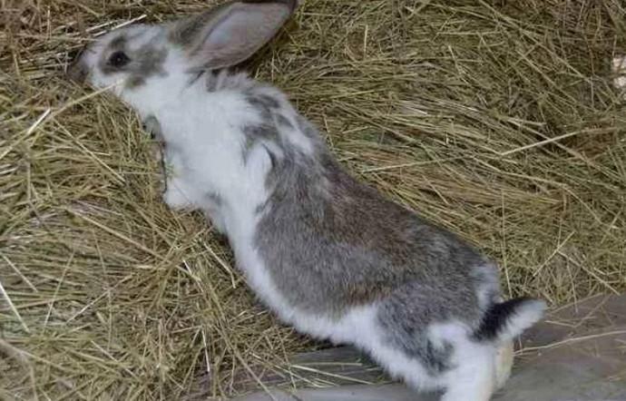 кролик в сене