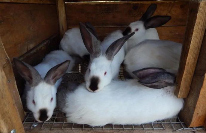 кролики лежат