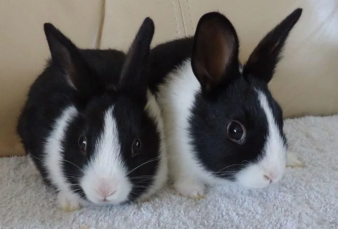 кролики на диване