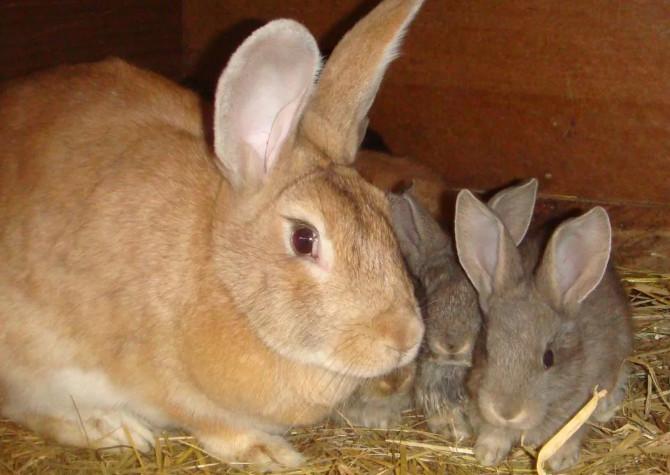 мама и крольчата