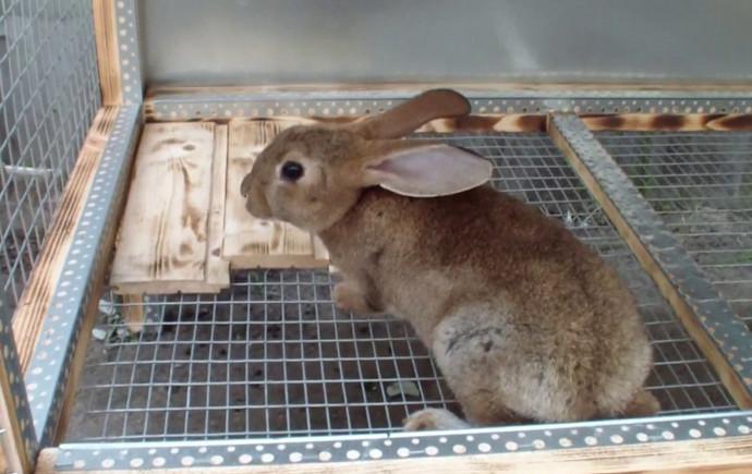 один кролик