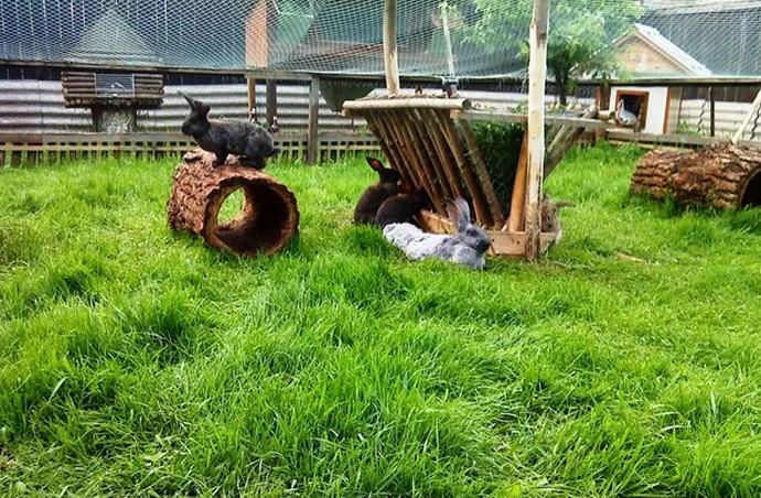поле для кроликов