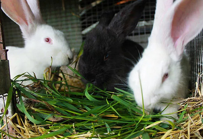 три кролика