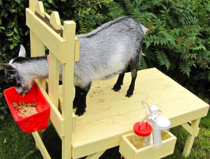 кормушка для козла