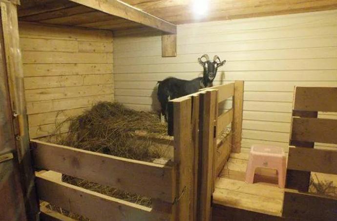 коза в стоиле