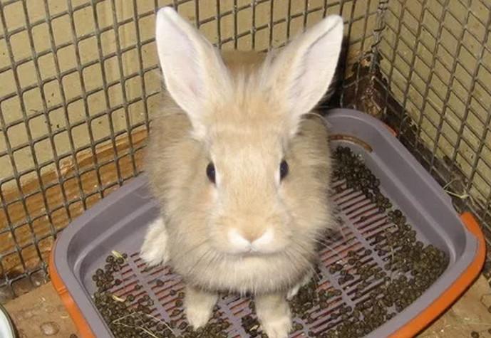 кролик на горшке