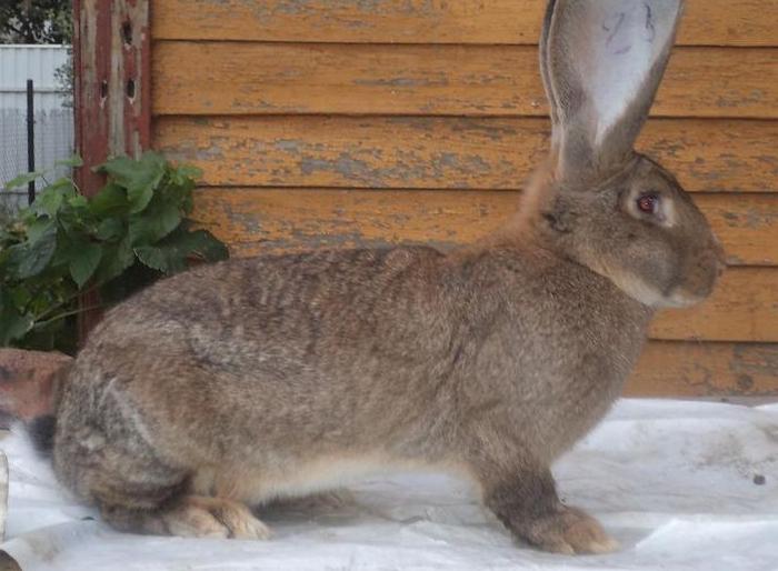 кролик обед
