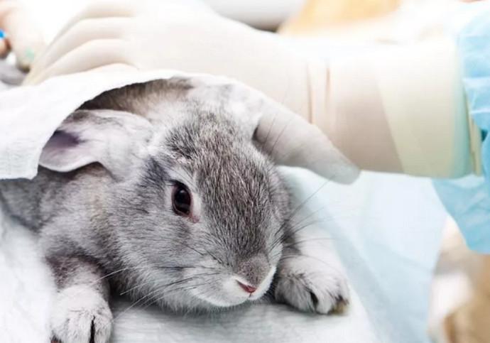кролик и врач