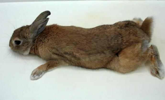кролик не ходит