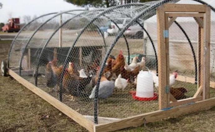 клетка для куриц