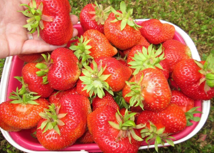 ягоды в чашке