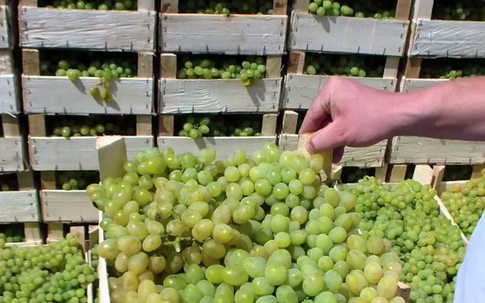 ящики винограда