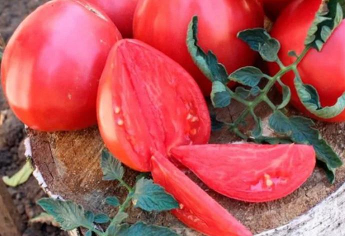 большие томаты