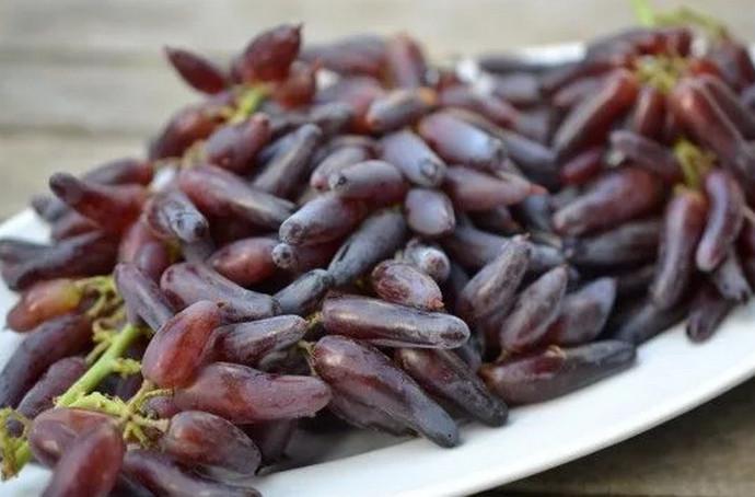 длиный виноград