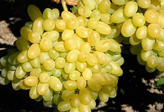 желтые грозди