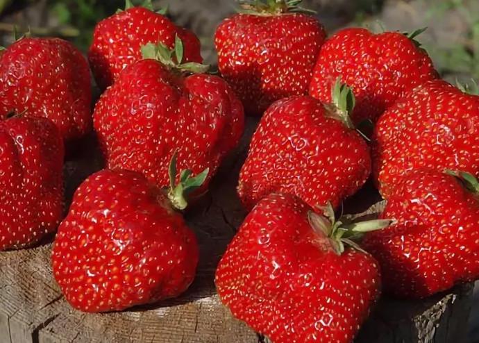 ягоды на пеньке