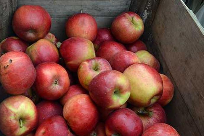 ящик яблок