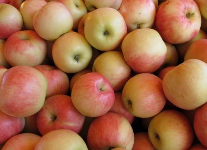 яблоки лежат